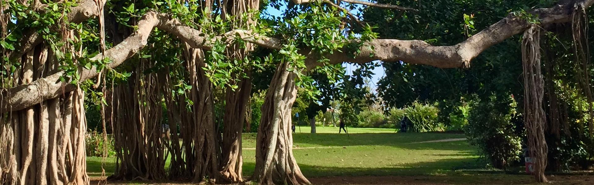 Botanical Gardens Bermuda